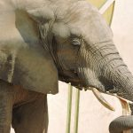 熊本市動植物園 象