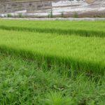 農業・水田