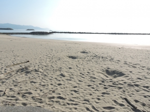 富岡海水浴場(苓北町) | オールクマモト