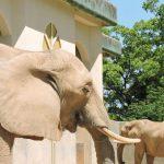 熊本市動植物園・象