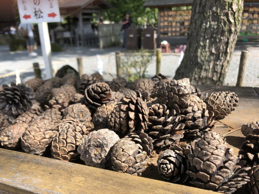 阿蘇神社:縁結びの松